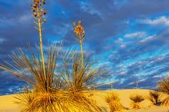 белизна Египета Сахары пустыни западная Стоковое Фото
