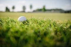белизна зеленого цвета травы гольфа шарика Стоковая Фотография RF