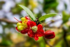 белизна изолированная цветком Стоковые Изображения RF