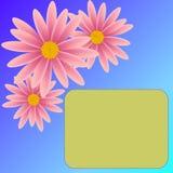 белизна изолированная цветком Стоковое Фото