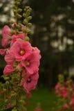 белизна изолированная цветком Стоковое Изображение