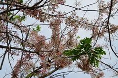 белизна изолированная цветком Стоковые Фото
