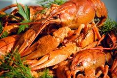 белизна изолированная crayfish Стоковое Изображение