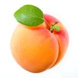 белизна листьев предпосылки абрикоса Стоковая Фотография RF