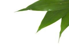 белизна листьев предпосылки зеленая стоковые изображения rf