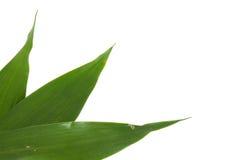 белизна листьев предпосылки зеленая стоковая фотография rf