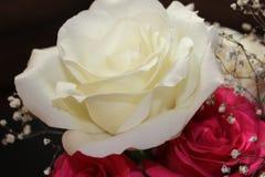 Белизна и конец-вверх красных роз Стоковые Фото
