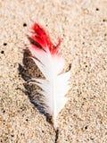 Белизна и прочитанное перо на пляже в гавани сандвича, Намибии Стоковое Изображение