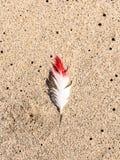 Белизна и прочитанное перо на пляже в гавани сандвича, Намибии Стоковая Фотография