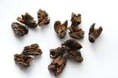 белизна иллюстрации cacao фасолей предпосылки темная Стоковое фото RF