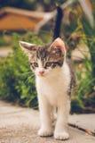 Белизна и tomcat tabby на конкретной плитке в саде Стоковая Фотография