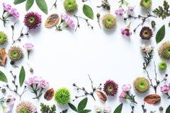белизна 4 кадров предпосылки различная флористическая установленная Стоковое Фото