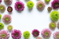 белизна 4 кадров предпосылки различная флористическая установленная Стоковые Фотографии RF