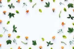 белизна 4 кадров предпосылки различная флористическая установленная Стоковые Изображения RF