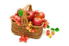 белизна корзины предпосылки яблок Стоковое Изображение RF