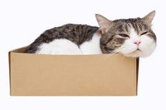 белизна кота коробки предпосылки Стоковое Изображение