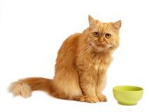 белизна кота предпосылки красная стоковые фото