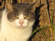 белизна кота серая Стоковые Изображения