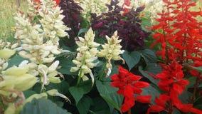Белизна & красный цвет Стоковое фото RF