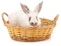 белизна кролика предпосылки изолированная корзиной Стоковые Фото
