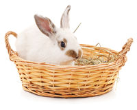 белизна кролика предпосылки изолированная корзиной Стоковые Фотографии RF