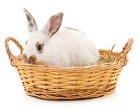 белизна кролика предпосылки изолированная корзиной Стоковые Изображения