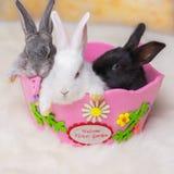 белизна кролика предпосылки маленькая Стоковое Изображение