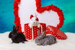 белизна кролика предпосылки маленькая Стоковые Изображения RF