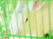 белизна кролика Стоковое Изображение RF