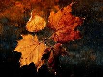 белизна клена листьев осени изолированная предпосылкой стоковое изображение