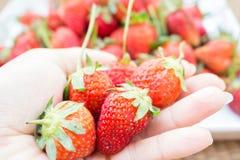белизна клубники предпосылки изолированная плодоовощ Стоковая Фотография RF