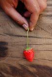 белизна клубники предпосылки изолированная плодоовощ Стоковая Фотография