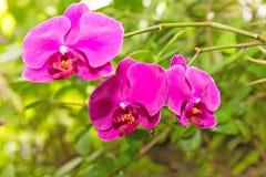 белизна орхидеи изоляции красная Стоковые Фото