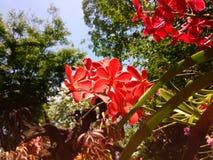 белизна орхидеи изоляции красная Стоковое фото RF