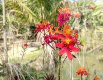 белизна орхидеи изоляции красная Стоковые Изображения RF