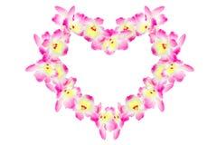 белизна орхидеи предпосылки пурпуровая Стоковое Изображение