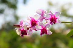 белизна орхидеи цветка пурпуровая стоковое фото