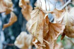 белизна осени изолированная принципиальной схемой Желтый цвет листьев осени сухой Стоковое фото RF