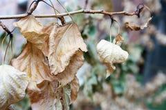 белизна осени изолированная принципиальной схемой Желтый цвет листьев осени сухой Стоковая Фотография RF