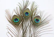 белизна павлина пера предпосылки Стоковое Изображение