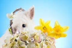 белизна пасхи зайчика Стоковые Фото