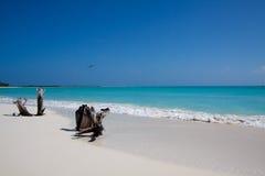 белизна песка пляжа тропическая Стоковая Фотография