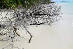 белизна песка Стоковое Фото