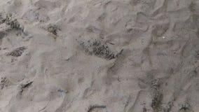 белизна песка Стоковая Фотография RF