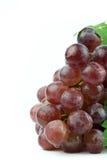белизна предпосылки изолированная виноградиной красная Стоковое Фото