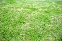 белизна предпосылки изолированная травой Стоковые Изображения