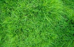 белизна предпосылки изолированная травой Стоковые Изображения RF