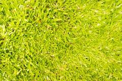 белизна предпосылки изолированная травой Стоковая Фотография RF