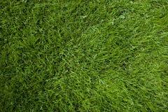 белизна предпосылки изолированная травой Стоковое Изображение RF