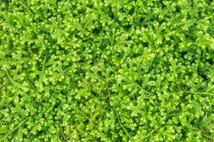 белизна предпосылки изолированная травой Стоковое фото RF